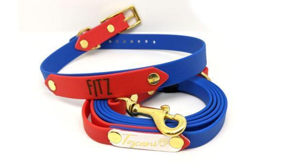 kit bicolore inciso per cani toscani store fibbia color blu e rosso oro